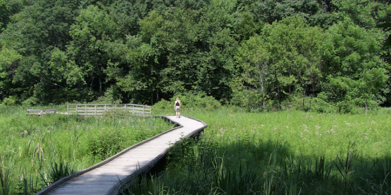 person from behind walking on a wooden trail